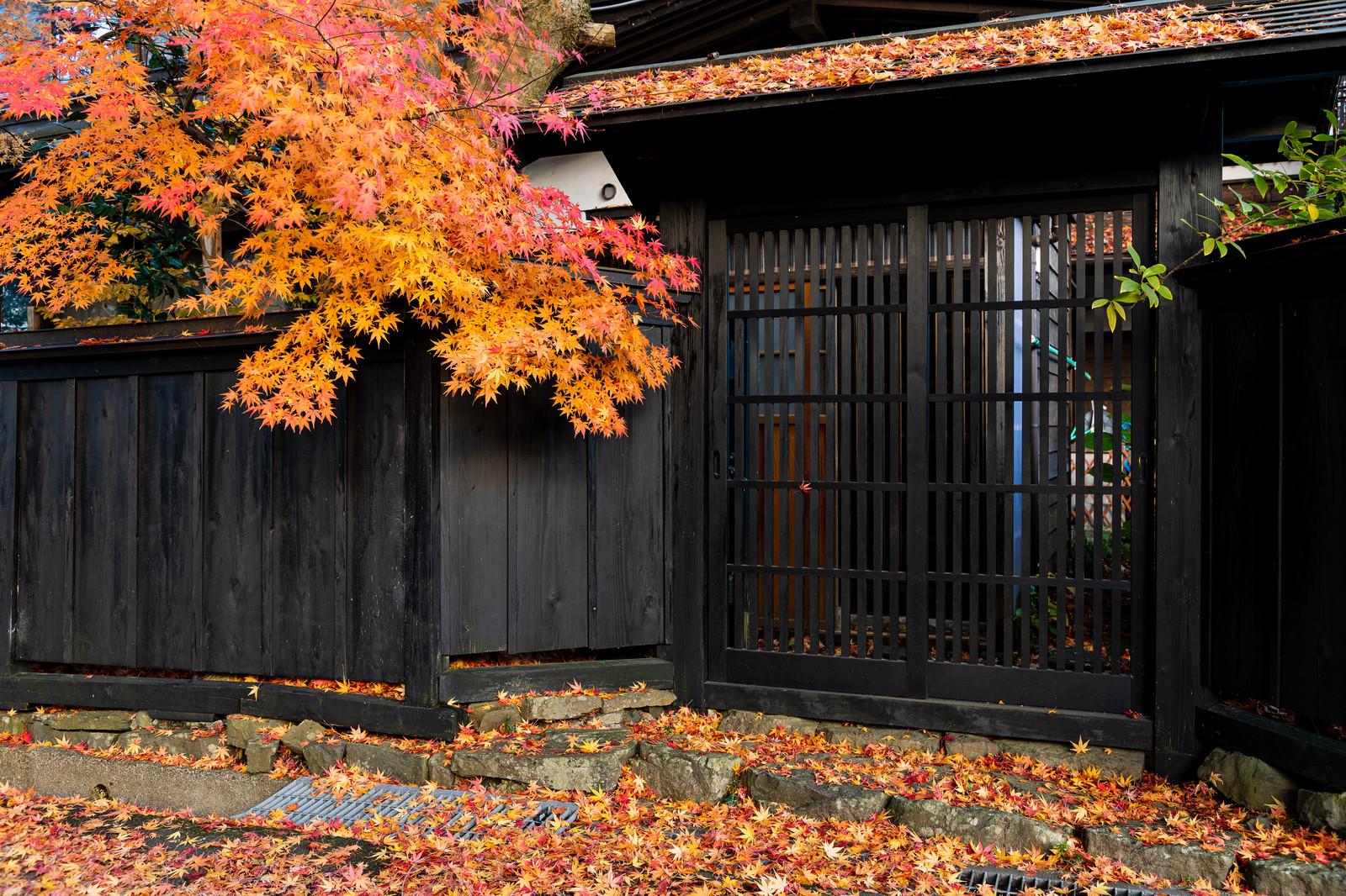 もみじの落葉と和風の門扉の写真素材