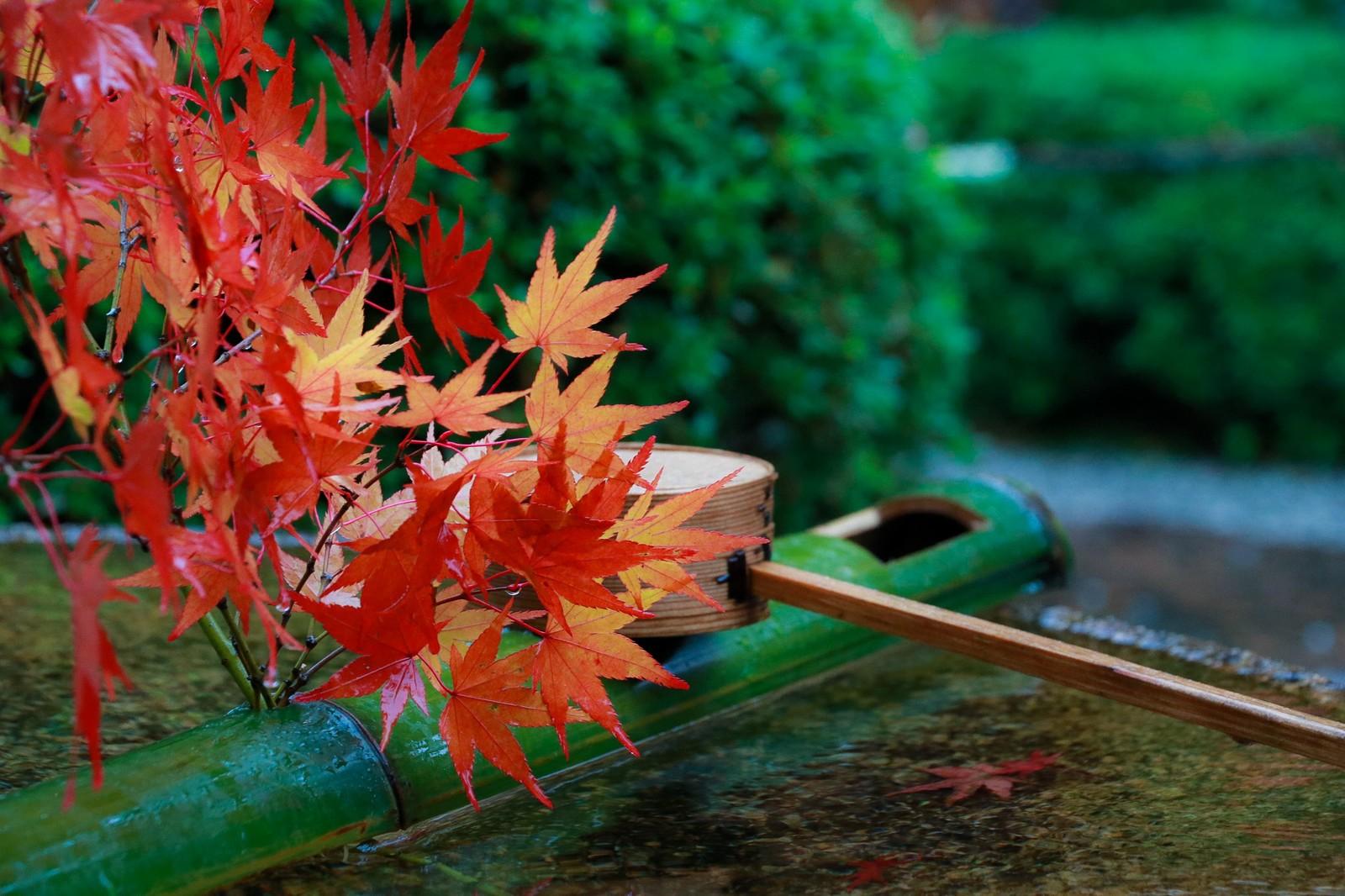 紅葉と手水台